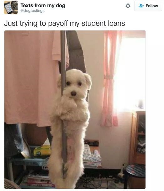 """dog hanging around pole captioned """"trying to pay off my student loans"""""""