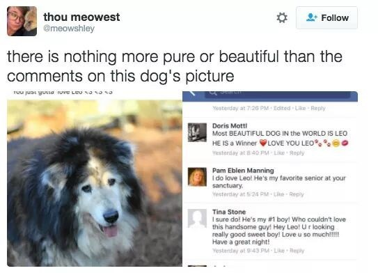 pure and beautiful Facebook comments on senior dog's picture
