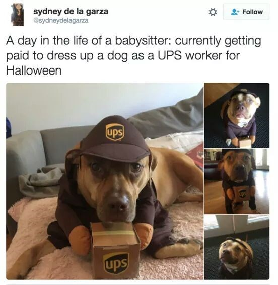 dog dressed up in a UPS worker costume for Halloween
