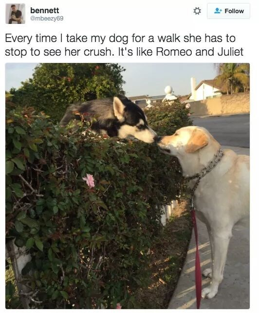 dog on walk stops to touch snouts with another dog described as her crush