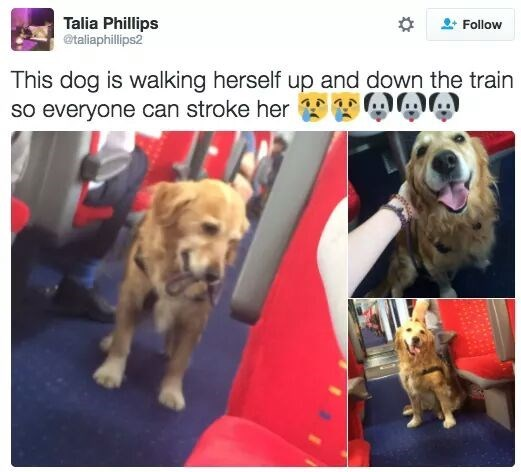 pictures of dog walking itself up and down train to get pets from riders