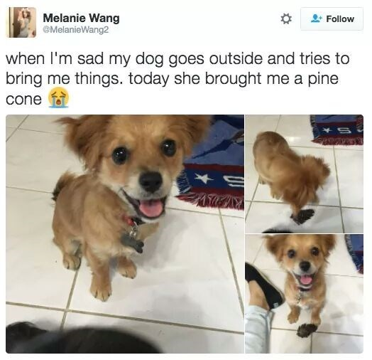 dogs brings owner gifts like pine cones when they're sad