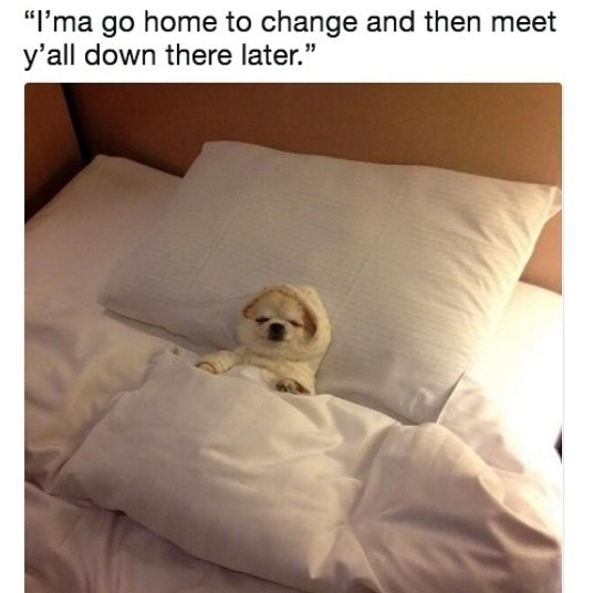 meme about promising to go out but instead going to sleep with picture of dog in pajamas lying in bed