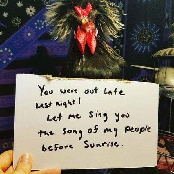 Rooster - You ver out Late LASt niqt Let me Sing you the song o my people before Sunrise S