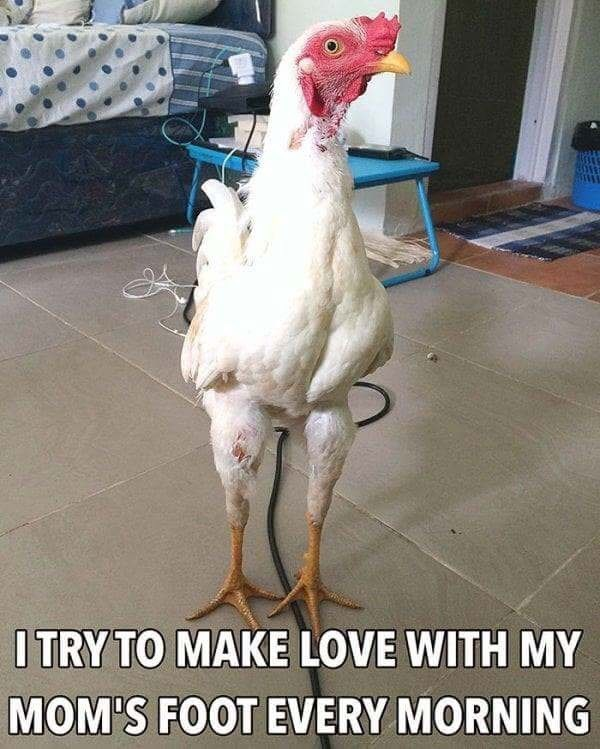 Chicken - ITRY TO MAKE LOVE WITH MY MOM'S FOOT EVERY MORNING