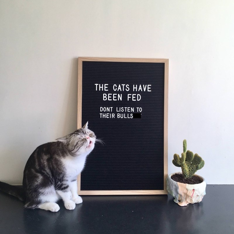 """cat meowing in front of blackboard that reads """"the cats have been fed, don't listen to their bullshit"""""""