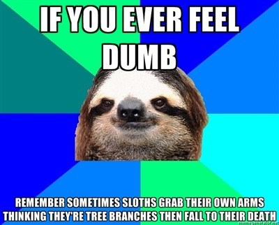 meme about sloths being dumb and grabbing own arms thinking they're tree branches