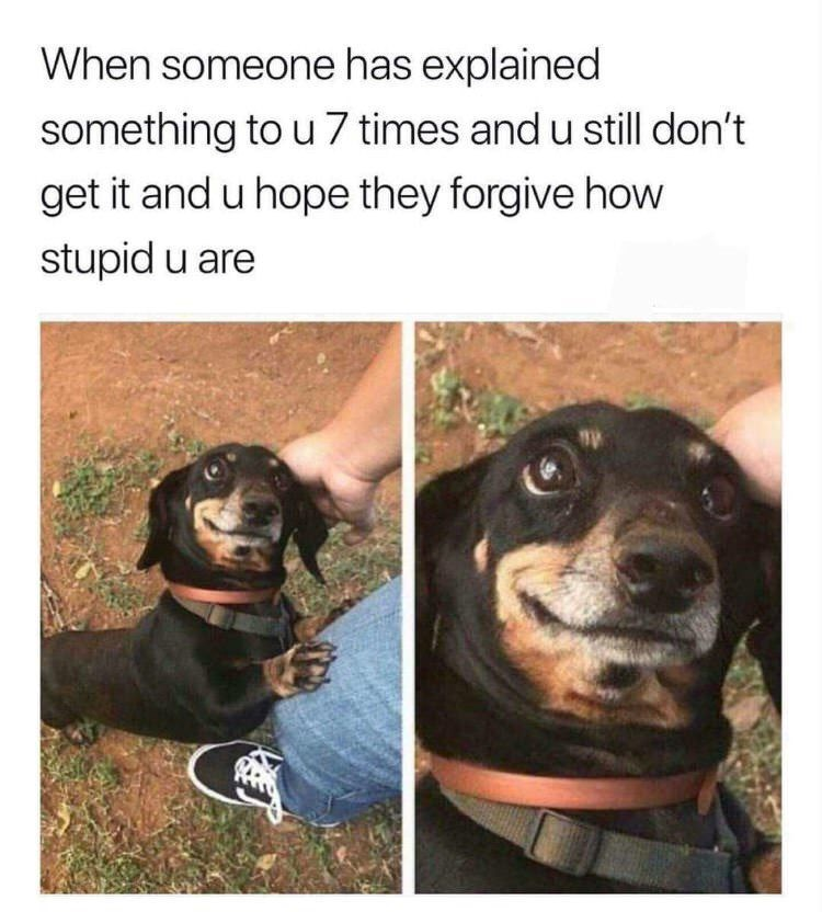 meme about hoping people forgive you for not understanding after being explained numerous times with picture of dog looking up hopefully