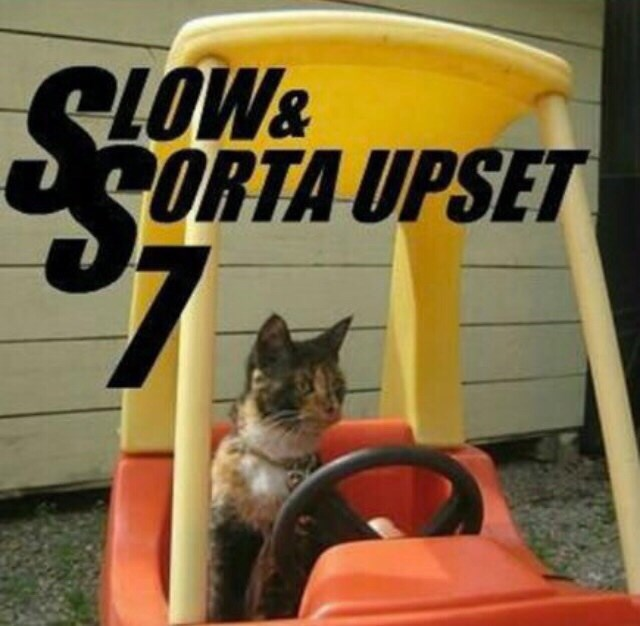 "fast and furious parody with cat in toy car captioned ""slow and sorta upset 7"""