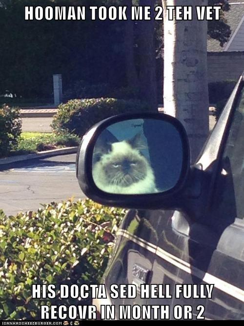 Cat Humor #6