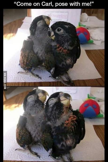 "Vertebrate - ""Come on Carl, pose with me!"" VIA 9GAG.COM"