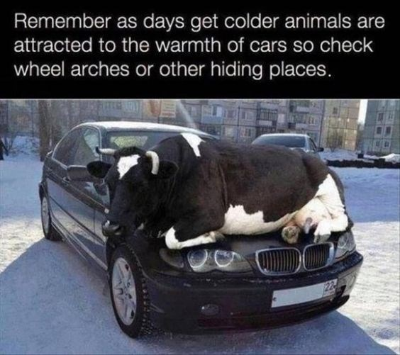 Car - Remember as days get colder animals are attracted to the warmth of cars so check wheel arches or other hiding places.