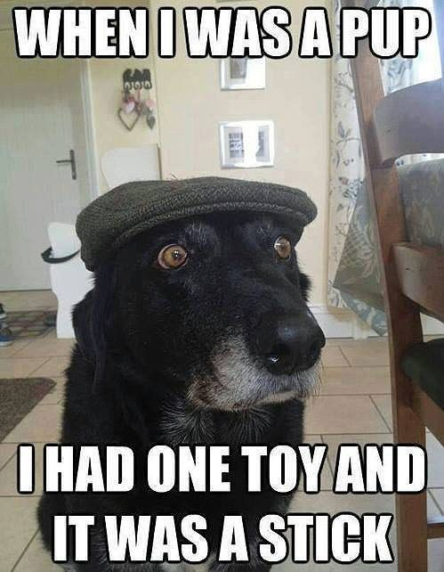 Canidae - WHENOWAS A PUP IHAD ONE TOY AND IT WAS A STICK T