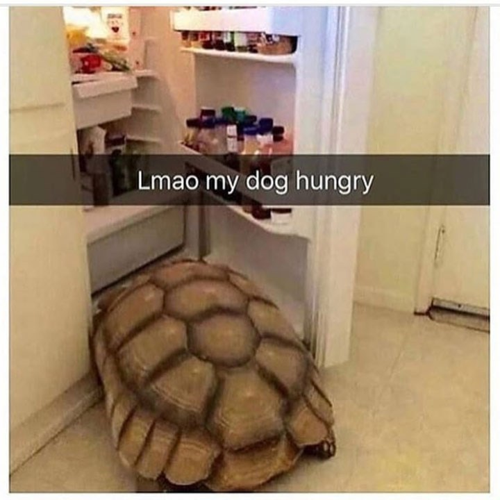Tortoise - Lmao my dog hungry