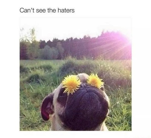 Sky - Can't see the haters