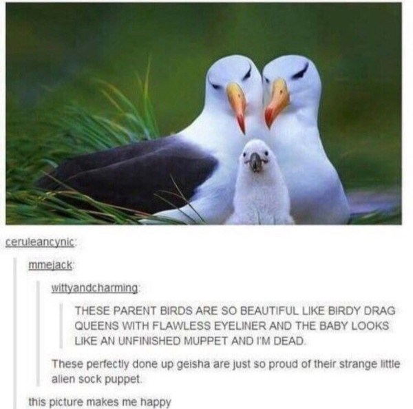 Bird - ceruleancynic mmejack wittyandcharming THESE PARENT BIRDS ARE SO BEAUTIFUL LIKE BIRDY DRAG QUEENS WITH FLAWLESS EYELINER AND THE BABY LOOKS LIKE AN UNFINISHED MUPPET AND I'M DEAD These perfectly done up geisha are just so proud of their strange little alien sock puppet this picture makes me happy