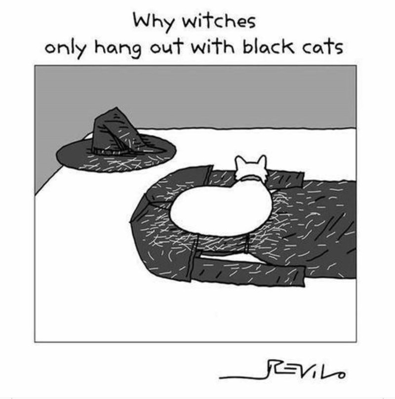 halloween Witches cute comic funny black cat - 9230669056