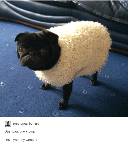 Sheep - prestoncarbonaro Baa, baa, black pug Have you any wool? :P