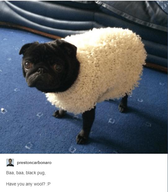Sheep - prestoncarbonaro Baa, baa, black pug Have you any wool? :P