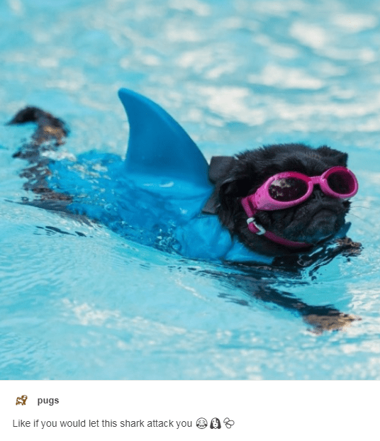 Water - $pugs Like if you would let this shark attack you
