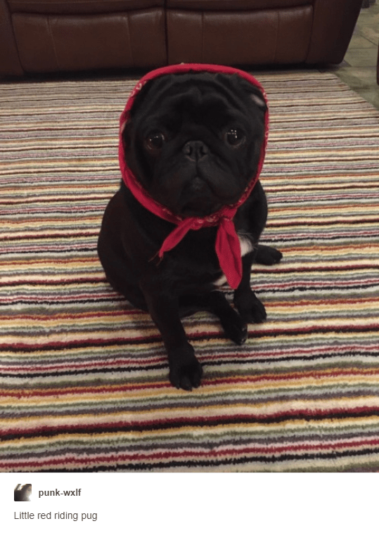 Dog - punk-wxlf Little red riding pug