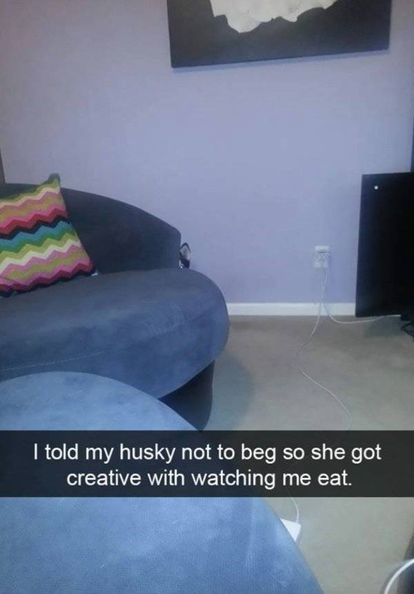 Floor - I told my husky not to beg so she got creative with watching me eat.