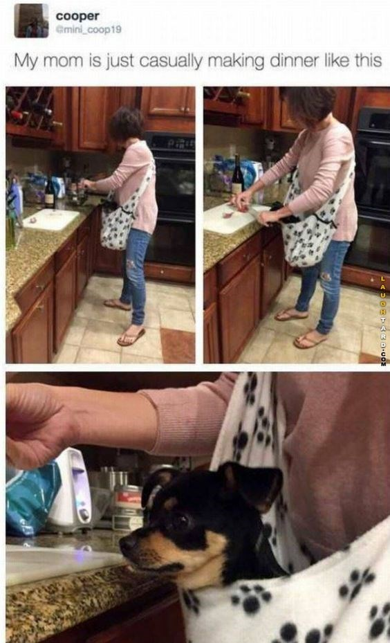 wholesome meme - Canidae - cooper emini_coop19 My mom is just casually making dinner like this