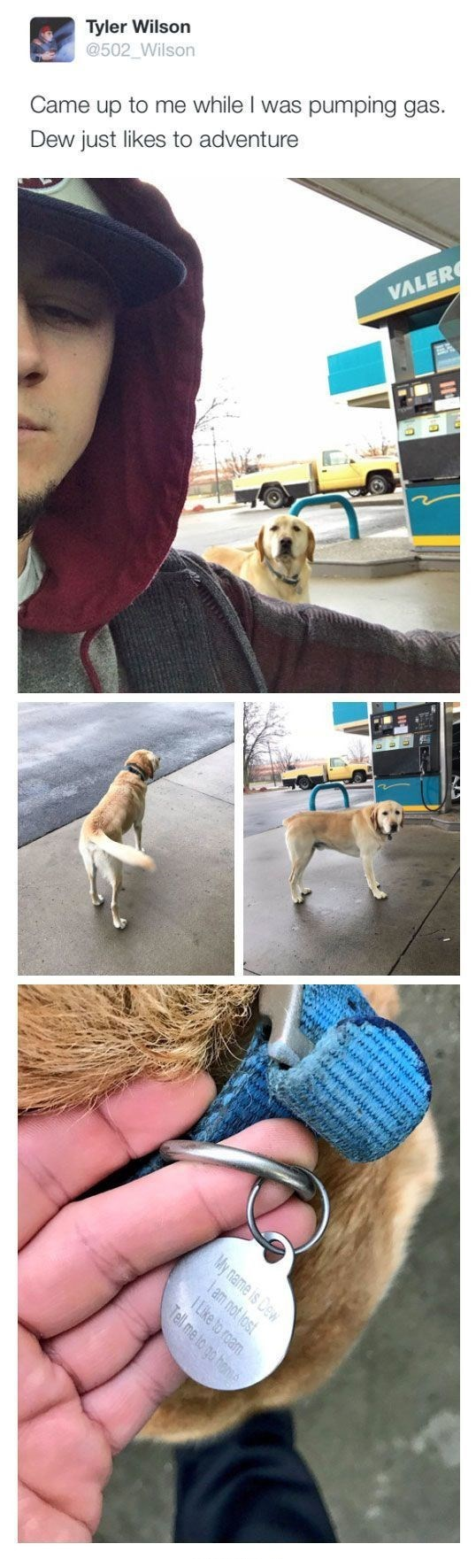 wholesome meme - Dog - Tyler Wilson @502 Wilson pumping gas. Came up to me while I was Dew just likes to adventure VALER E am not lost My name is Dew 1 Like to roam Tell me to go heme