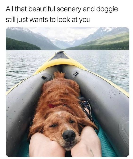 wholesome meme - Boating - All that beautiful scenery and doggie still just wants to look at you
