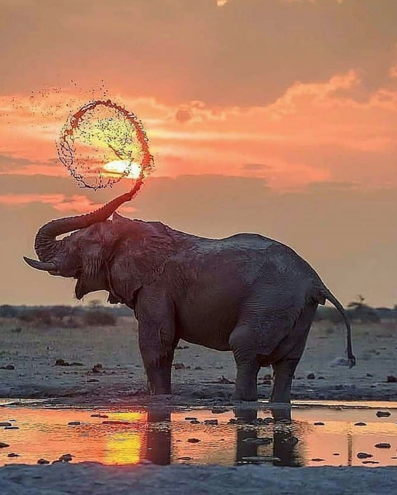 photography elephant stunning elephants beautiful - 9230875648