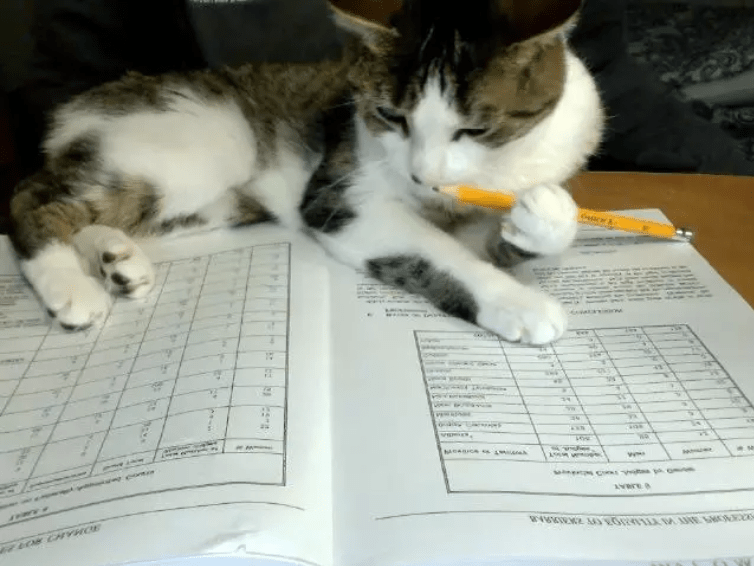 Cat - oalsg omn w CCNYHOE