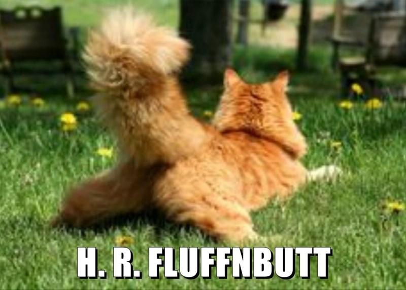 cat meme - Cat - H. R. FLUFFNBUTT
