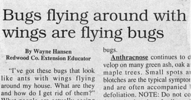 "headline - Text - Bugs flying around with wings are flying bugs bugs By Wayne Hansen Redwood Co. Extension Educator Anthracnose continues to d velop on many green ash, oaka ""I've got these bugs that look maple trees. Small spots a like ants with wings flying blotches are the typical sympto around my house. What are they and are often accompanied and how do I get rid of them?"" defoliation. NOTE: Do not co 1 1WL"