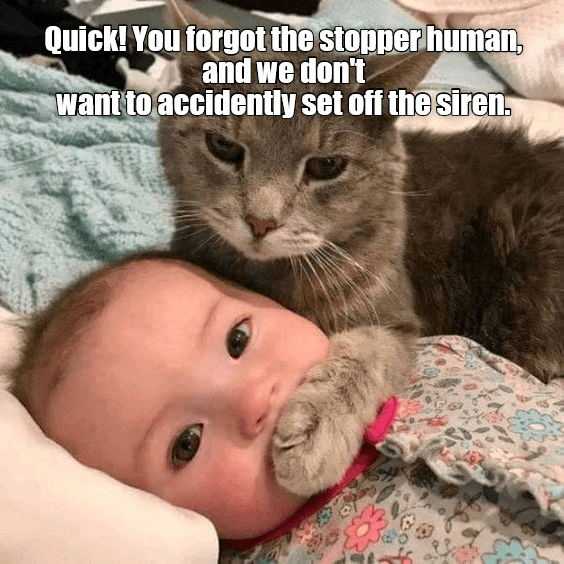 cat meme - Cat - Quick! You forgot the stopper human, and we don't Want to accidently set off the siren