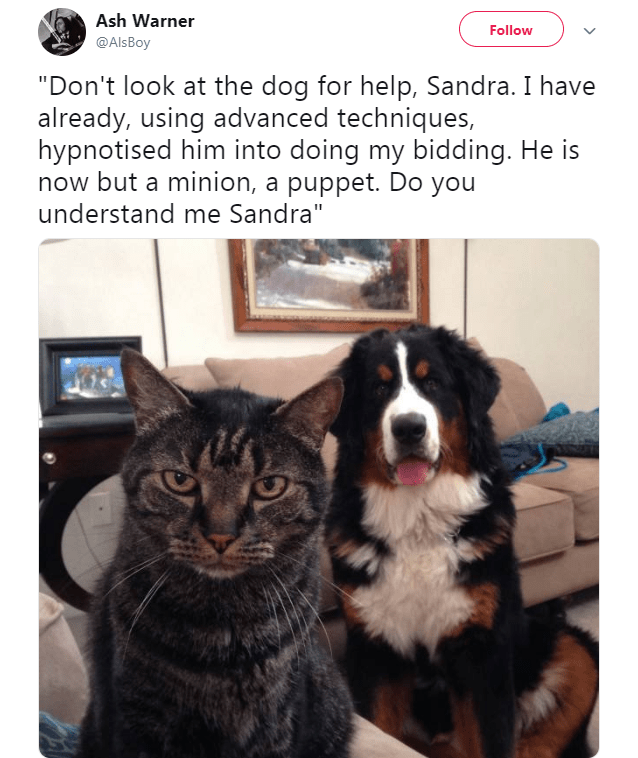 """Bernese mountain dog - Ash Warner Follow @AlsBoy """"Don't look at the dog for help, Sandra. I have already, using advanced techniques, hypnotised him into doing my bidding. He is now but a minion, a puppet. Do you understand me Sandra"""""""
