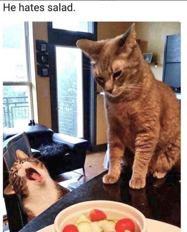Cat - He hates salad