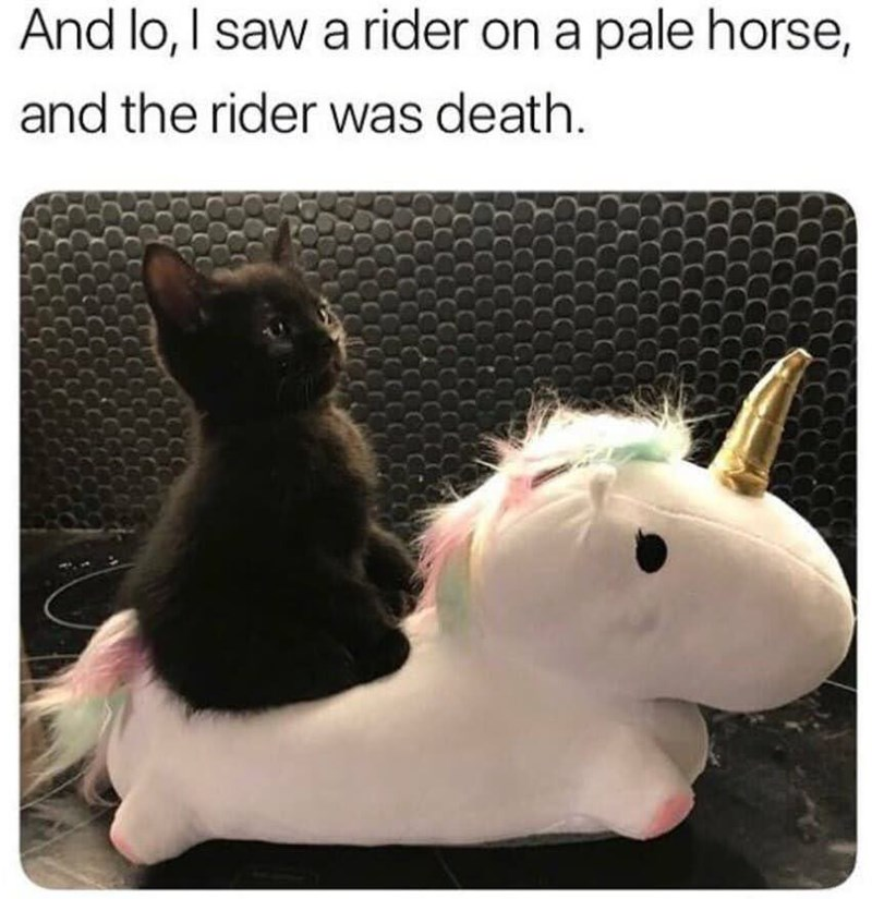 Cat - And lo, I saw a rider on a pale horse, and the rider was death.