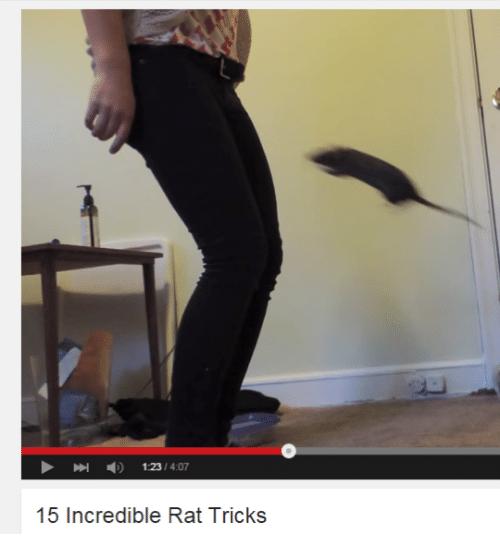 Standing - 123/4:07 15 Incredible Rat Tricks