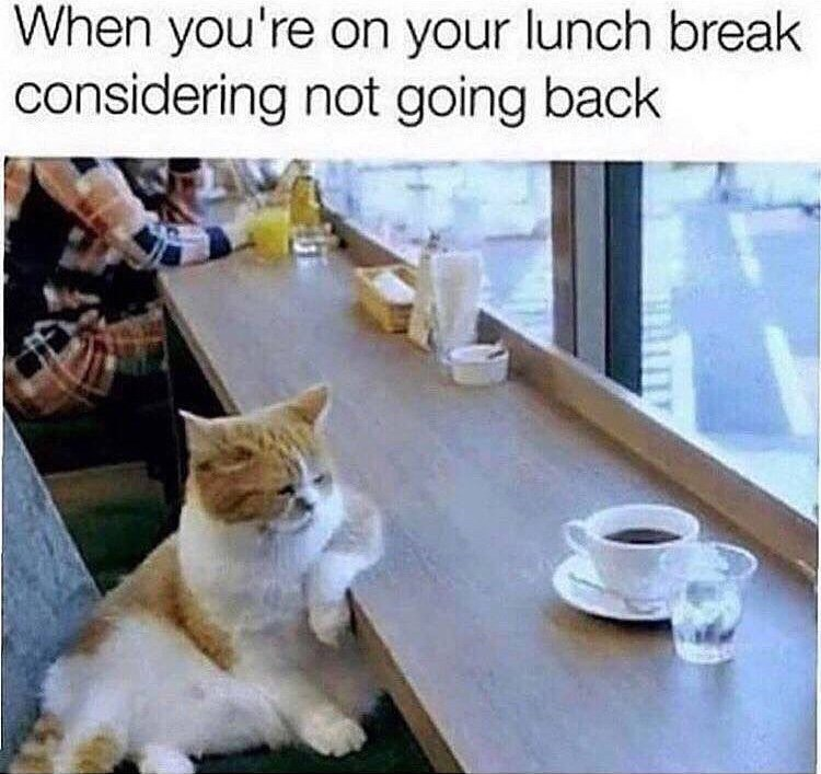 Cat - When you're on your lunch break considering not going back