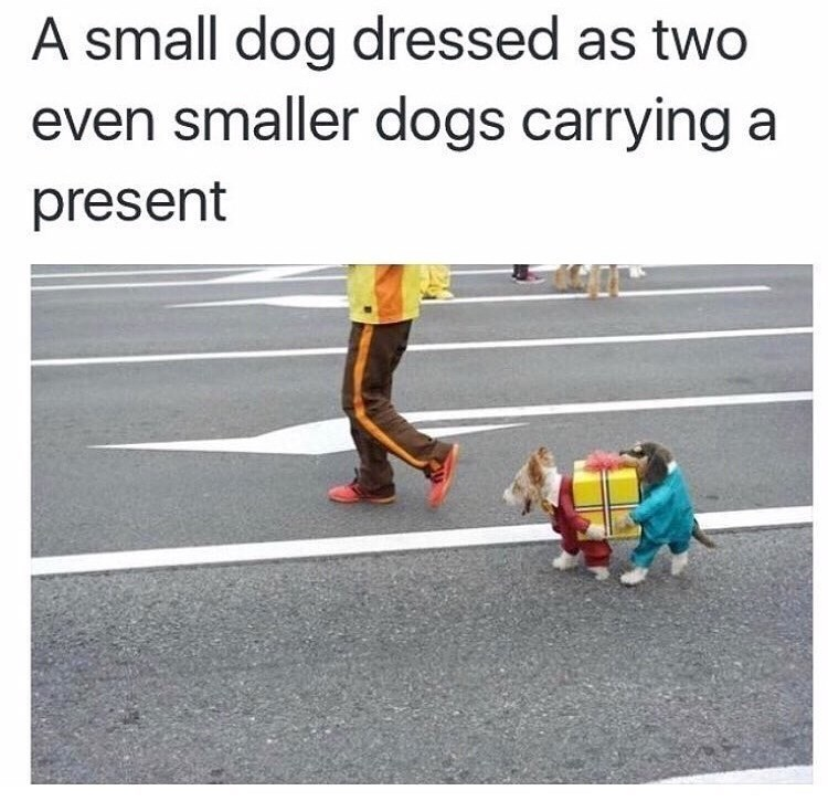 Text - A small dog dressed as two even smaller dogs carrying a present
