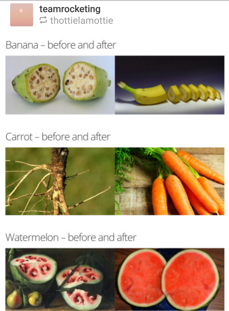 Natural foods - teamrocketing thottielamottie Banana -before and after Carrot-before and after Watermelon - before and after