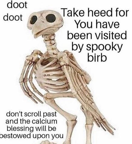 Joint - doot Take heed for You have been visited by spooky birb doot don't scroll past and the calcium blessing will be bestowed upon you