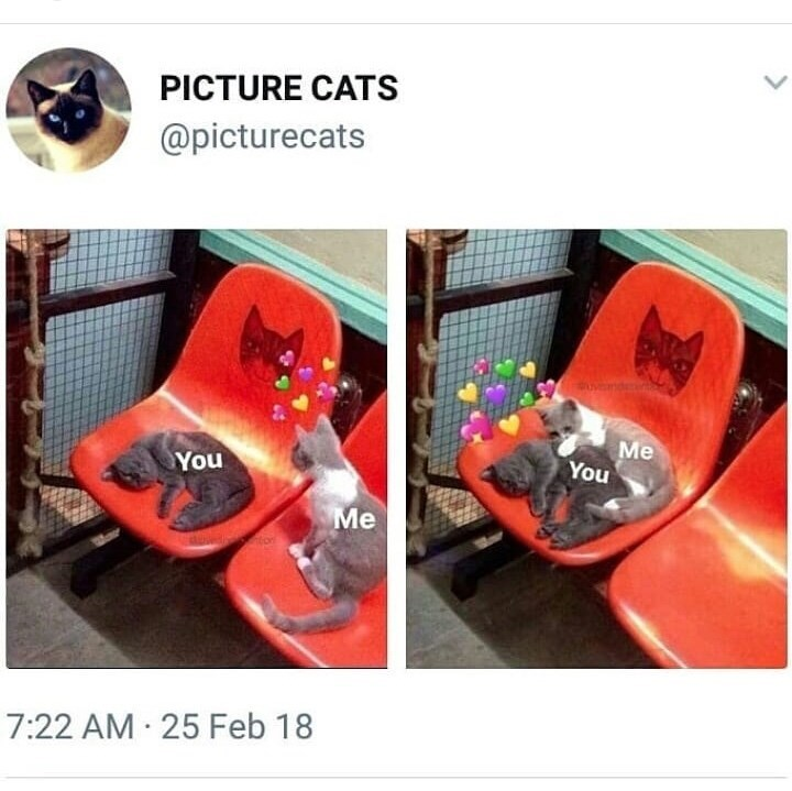 meme - Product - PICTURE CATS @picturecats vnd Me You You Me 7:22 AM 25 Feb 18