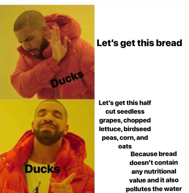 Hotline Drake meme about ducks not getting this bread but more nutritional alternatives