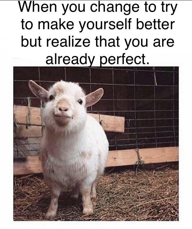 "picture of cute baby goat captioned ""when you change to try to make yourself better but realize that you are already perfect"""