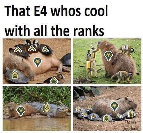 Terrestrial animal - That E4 whos cool with all the ranks The ville The alliance