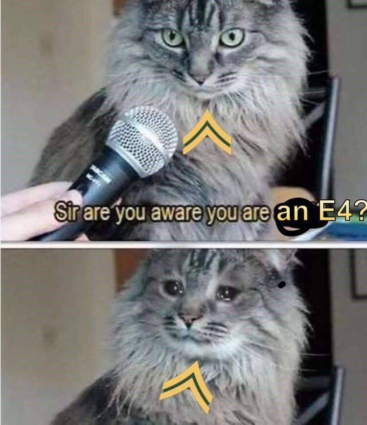 Cat - Sirare you aware you are an E4