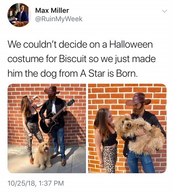 couple with dog dressed as A Star is Born meme for Halloween