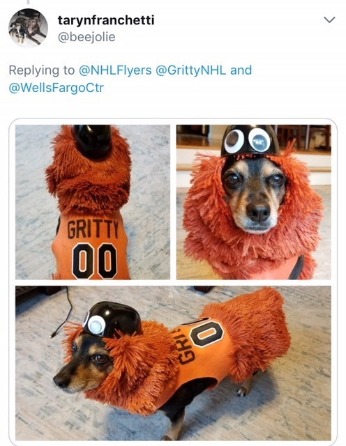 dog with orange fur dressed as Gritty the mascot for Halloween
