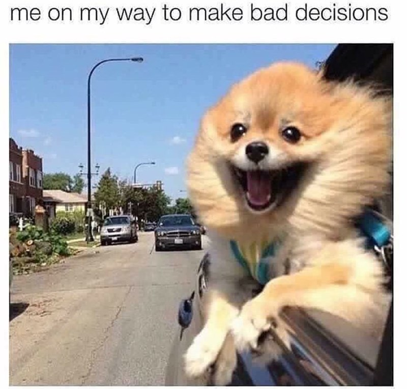 """Caption that reads, """"Me on my way to make bad decisions"""" above a pic of a little Pomeranian looking happy while sticking his head out of the window of a car"""